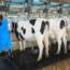 Aplicación De La Normativa De Seguridad Y De Protección Medioambiental En La Producción De Animales De Renuevo, De Reproductores, Crías Y De Producción De Leche
